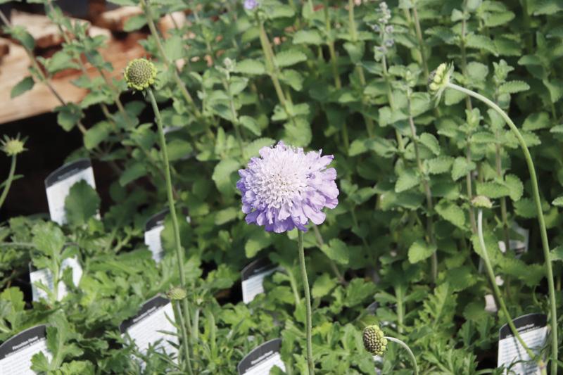 Greenhouses getting gardeners ready to grow
