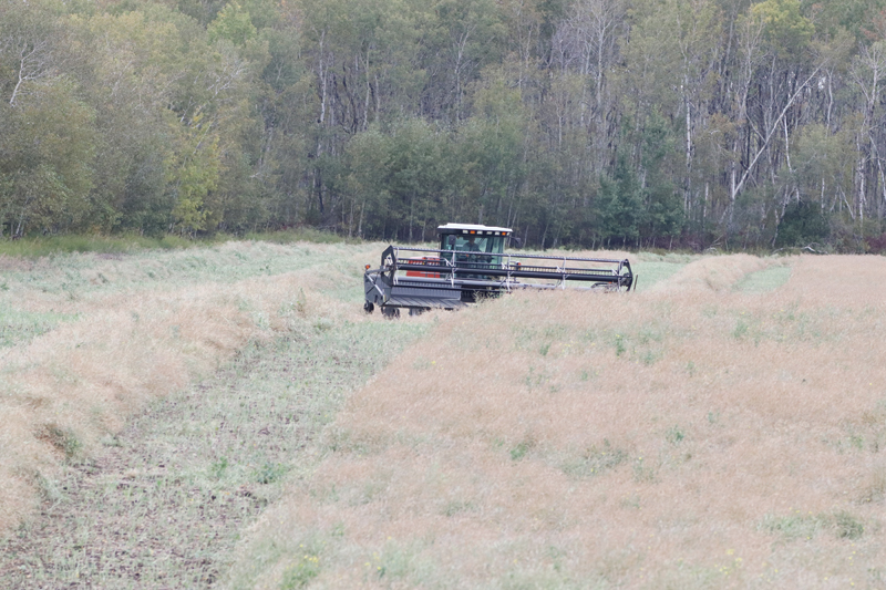 Crop yields are down, but prices are up